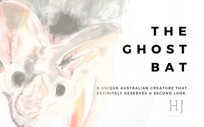 The Ghost Bat – An Australian Mammal