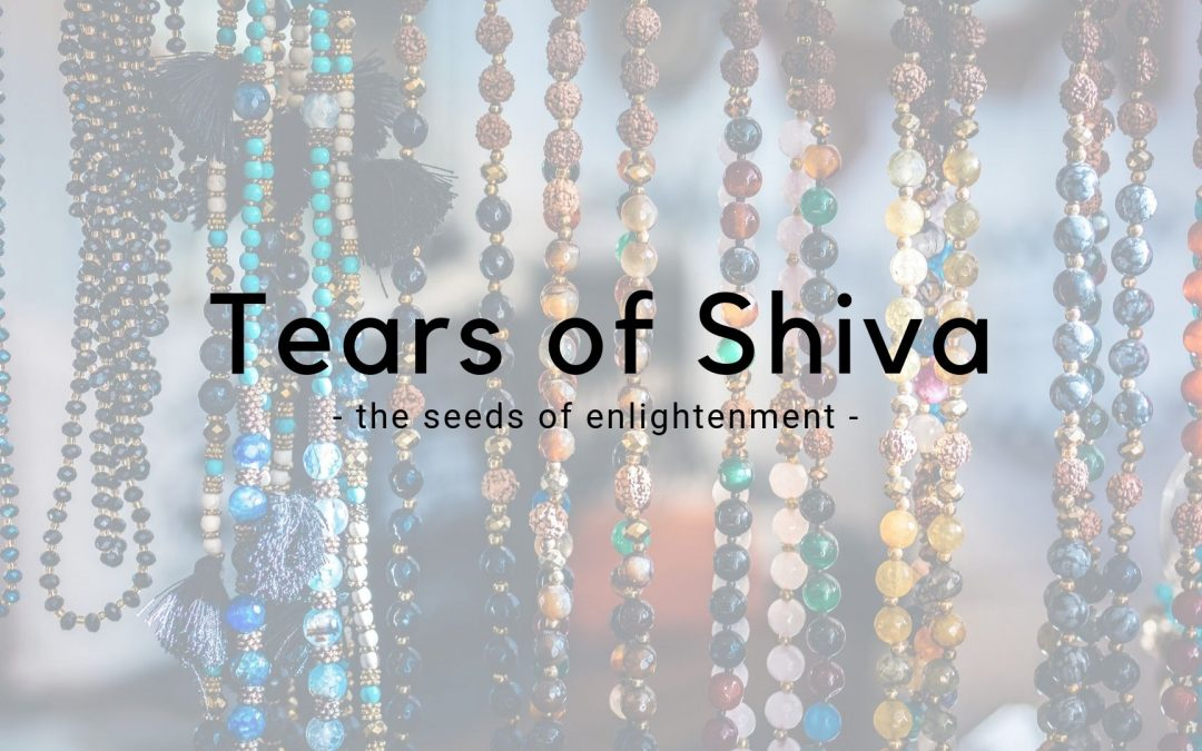 The Tears of Shiva – Seeds from a magic tree